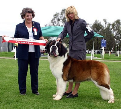 Stiniyasu Eclipse at St George  wins runner Up Best In Show